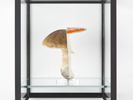 Doublemushroom Vitrine (single), 2012